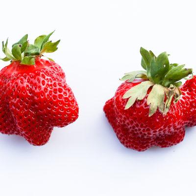 Mags-Frisch-Rezept-Erdbeer-Cheesecake-und-Erdbeeren-selberpfluecken